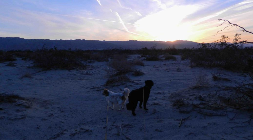 Dogs facing in opposite directions at dawn in the desert.