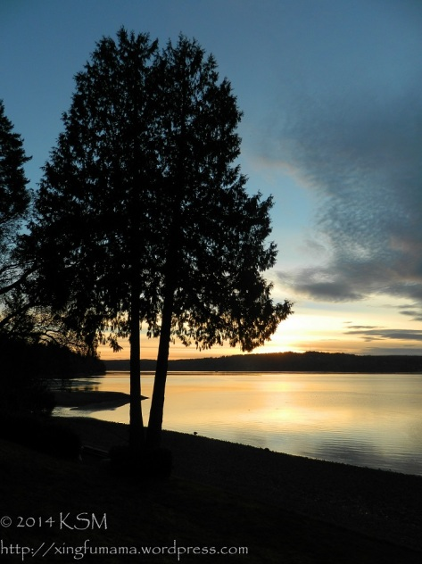 The silhouette of twin cedar trees in the last rays of the sun and their reflection on the calm  waters of puget sound.