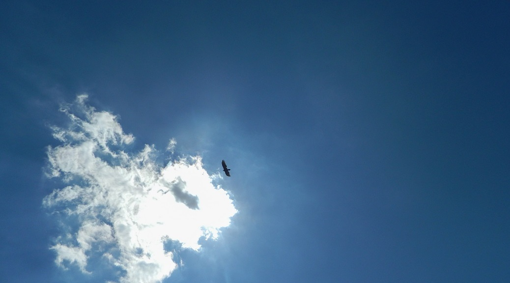 Blue sky with a cloud and an eagle soaring.