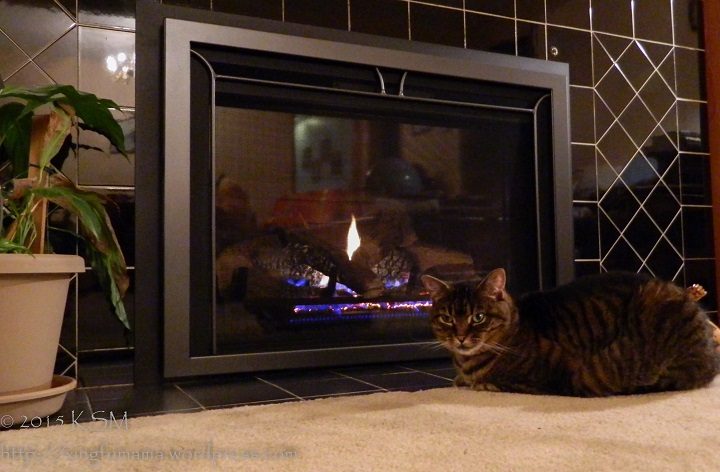 Cat by the fireplace.