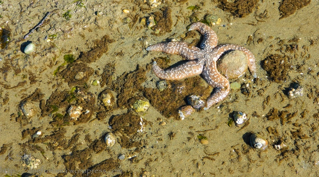 Sea star hugging a rock.