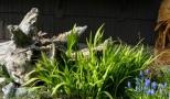Side lit crocosmia leaves.