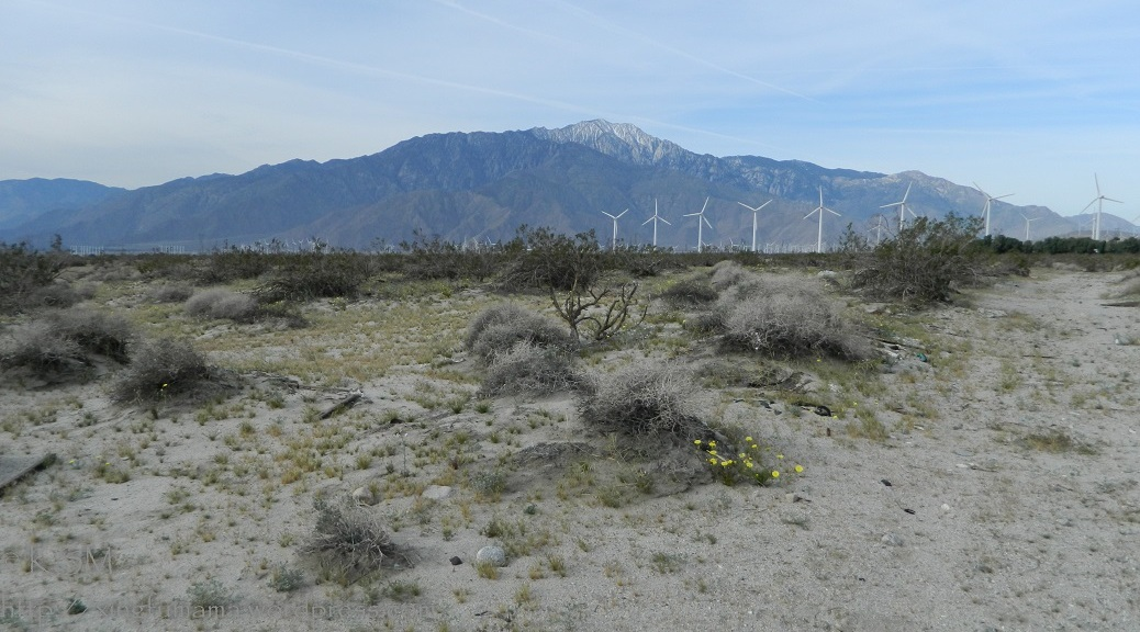 Desert landscape with windmills and Mt. San Jacinto