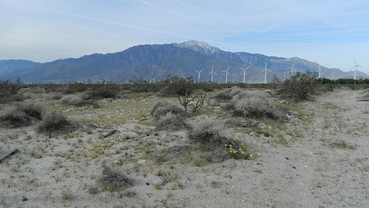 Desert landscape with dandelions.
