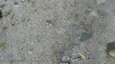 Desert floor.