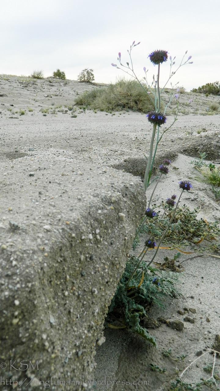 Desert wash with wild flower.