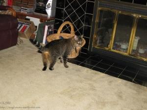 Tabby cat exploring.