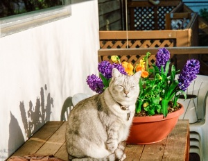 Silver tabby cat with flowers.