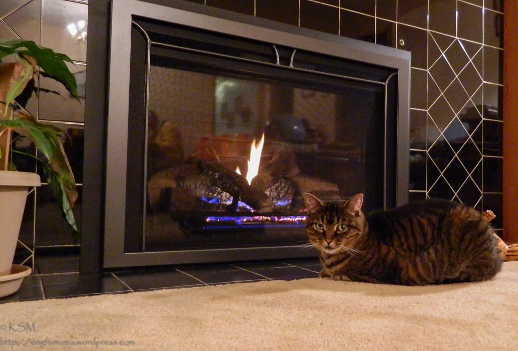 Fireplace and cat.