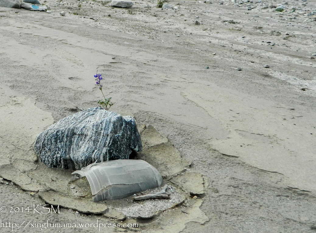 Wildflower, stripped granite rock and broken bottle in the desert.