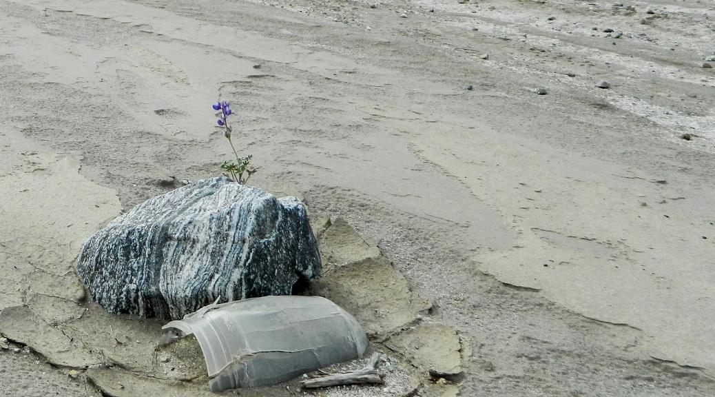 Wildflower, stripped granite rock and broken bottle in the desert.