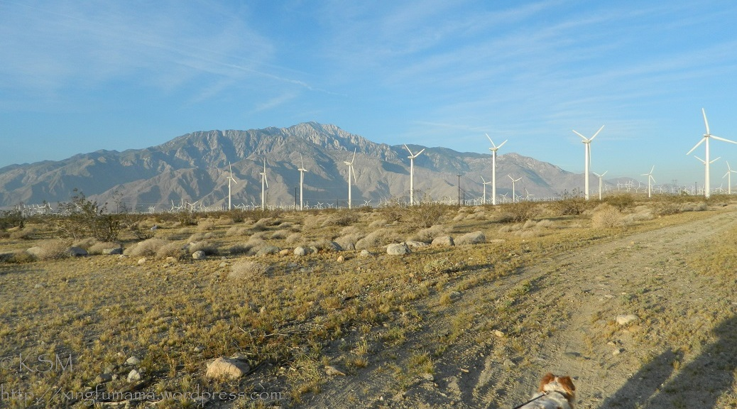 Mt. San Jacinto and windmills.