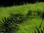 KSM20130718-Monochrome_Green-04-720px