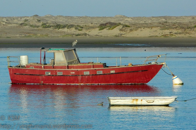 Boats and birds in Morro Bay, California.
