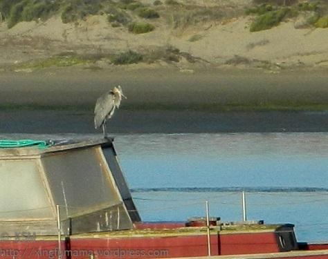 Boats and birds in Morrow Bay, California
