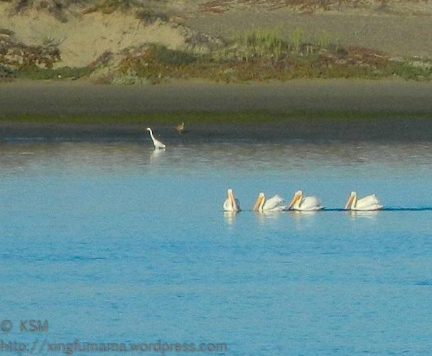 Birds in Morro Bay California