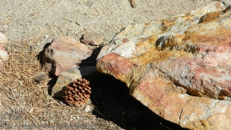 Pinecone and rock on Mount San Jacinto in California.