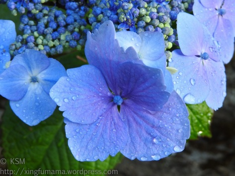 Close up of a hydrangea floret.