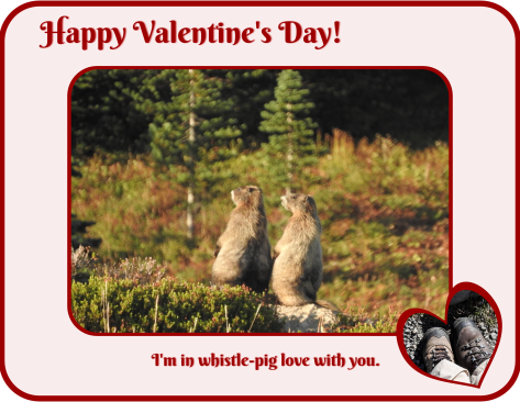 Whistle pigs valentine