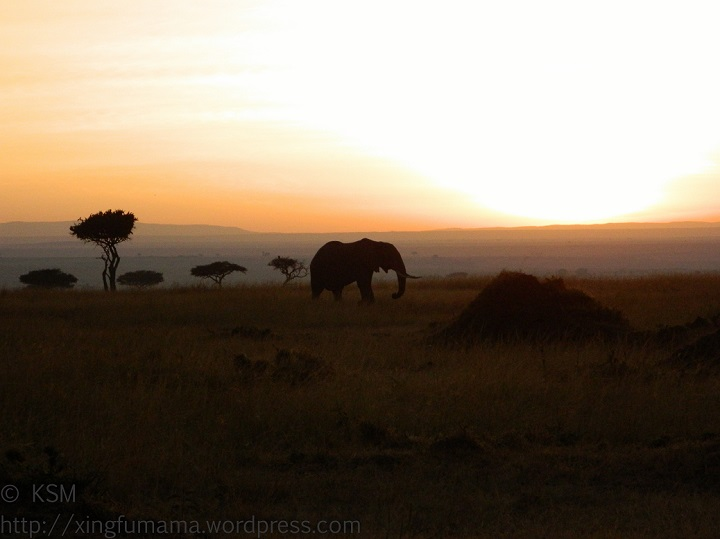 Elephant at dawn in Masai Mara, Kenya