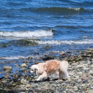 KSM-20160501-MayDay-at-the-Beach-03