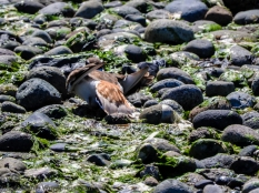 KSM20160727-DP-Crisis-Birds_on_the_Beach-01