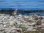 KSM20160727-DP-Crisis-Birds_on_the_Beach-04