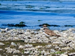 KSM20160727-DP-Crisis-Birds_on_the_Beach-05