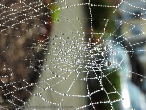 ksm-20161110-the_web-01
