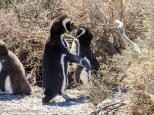 Penguin love.