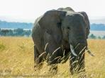 ksm-20120213-elephant-03