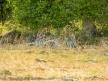 ksm-20120214-african_tree_shadows-04