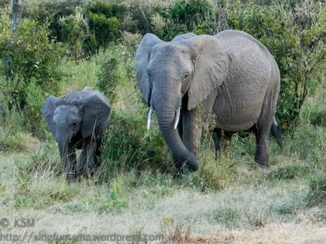 ksm-20120215-elephant-05