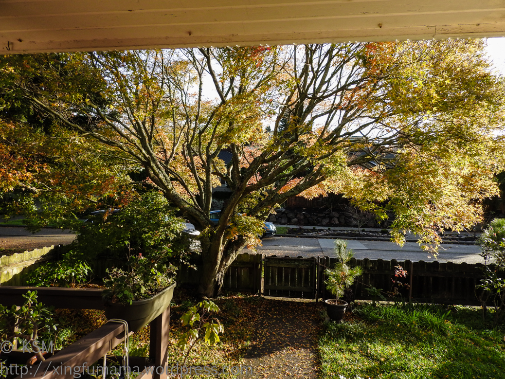 03-20151118KSM-View_from_Front_porch