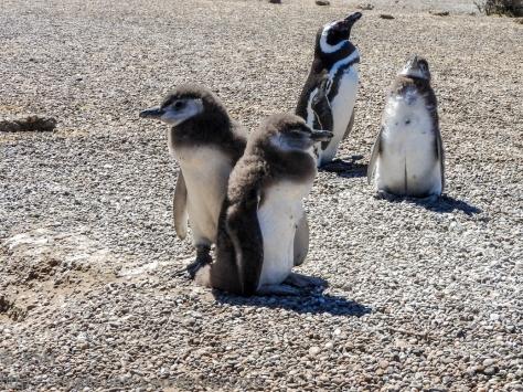 ksm-20170110-penguins-08