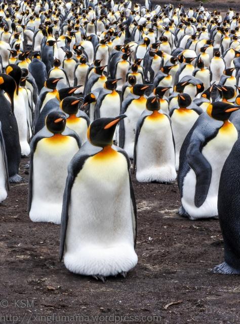 ksm-20170112-penguins-20