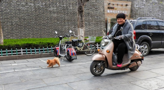 Scooting the dog