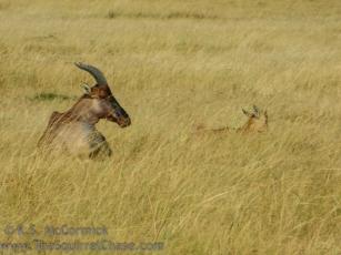 01-20120213-Wild_Mothers
