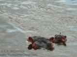 03-20120213-Wild_Mothers