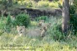 04-20120213-Wild_Mothers