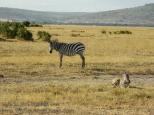 06-20120214-Wild_Mothers