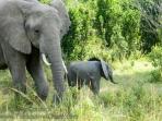 08-20120214-Wild_Mothers