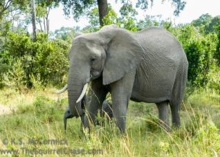 10-20120214-Wild_Mothers