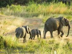 12-20120215-Wild_Mothers