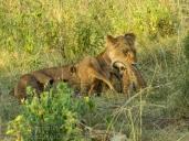 14-20120215-Wild_Mothers