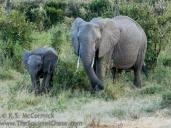 15-20120215-Wild_Mothers