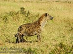 17-20120215-Wild_Mothers