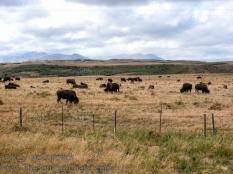 22-20160907-National_Parks