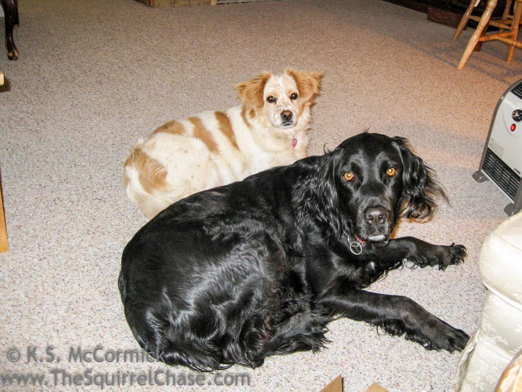 20100227-KSM-Puppy_Friends