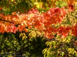 20171017-Fall_Colors-01